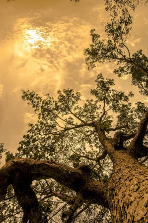 tree-428087_1920